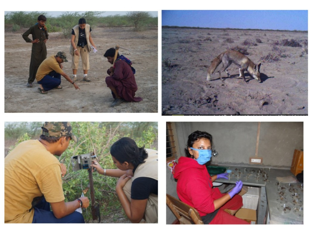 Kadambari Devarajan carrying out fieldwork on the carnivores of the Kutch district of India