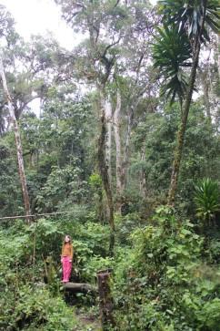Sahondra in the rainforest of Ankadivory