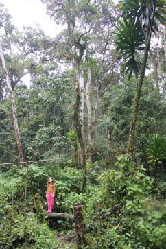 Sahondra in the rainforest of Ankadivory